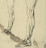 Leonardo: leg drawing